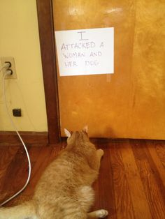 cat shaming - funnier than the dog shaming, in my opinion!