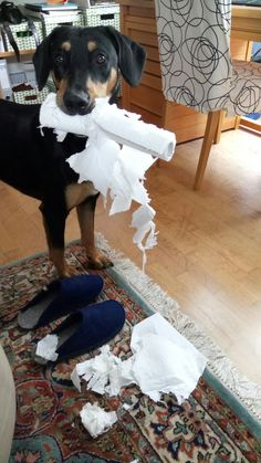 Ich bin beim Saubermachen!