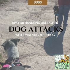 Learn what to do before you encounter a dog attack. Find out more about dog body language and how to prepare yourself before you go on a walk with your dog.