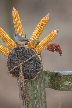 Create a Sunflower and Corn Feeder that Looks Like a Turkey
