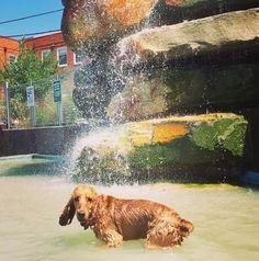 splash time at clarendon dog park!