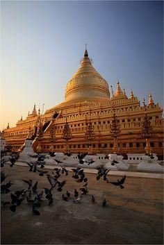 Flight of pigeons Shwezigon Pagoda, Myanmar