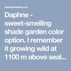 Daphne - sweet-smelling shade garden color option. I remember it growing wild at 1100 m above sealevel : Wildhaus CH - Shade Gardening