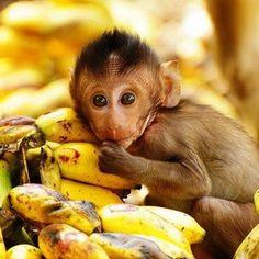 ¿Sabias que el banano es una fuente de fibra soluble que ayuda a bajar el colesterol, favorece la eliminación de líquidos y ayuda a normalizar el ritmo cardiaco? Y eso hasta él lo sabe