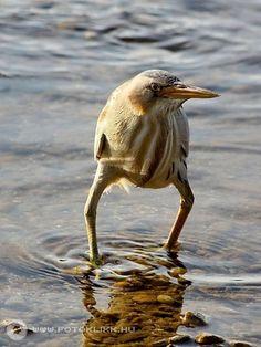 「これほど変なルックスを持つ鳥が、他にいるだろうか?」強烈なインパクトを放つ鳥:らばQ