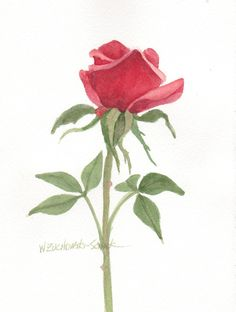 Red Rose Original Watercolor Painting by wandazuchowskischick