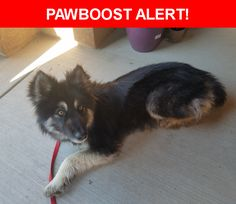 Is this your lost pet? Found in Colorado Springs, CO 80911. Please spread the word so we can find the owner!  Has a black harness and rabies tag  From Pueblo # 017138  Near Barnstormers Ave & Red Baron Dr