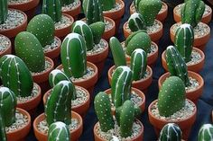 painted-rock-garden-ideas - Cactus Garden Ideas – AGardenIdeas.com
