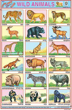 Wild Animal Stickers Chart Multicolor An. - Wild Animal Stickers Chart Multicolor An… – Wild Animal Stickers Chart Multicolor Animal chart - Wild Animals List, Cute Wild Animals, Jungle Animals, Farm Animal Crafts, Animal Crafts For Kids, Wild Animals Drawing, Animal Drawings, Animals Name In English, Preschool Charts