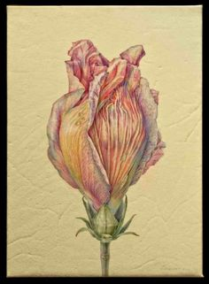 Jean Emmons | American Society of Botanical Artists