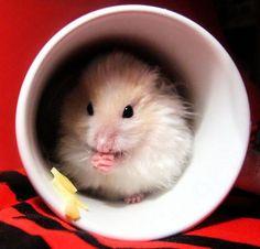 15 Cups of Animal Cuteness