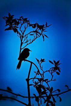 A silhouette lone bird on a tree Silhouette Painting, Silhouette Images, Landscape Silhouette, Bird Silhouette, Silhouette Fotografie, Silhouette Photography, Photography Challenge, Pastel Art, Bird Art