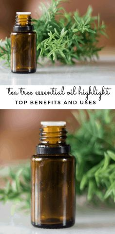 Tea tee essential oil has many benefits for your hair, skin, and overall health. Learn the best ways to use tea tree essential oil, make essential oil roller bottles, and tea tree diffuser blends. #teatree #teatreebenefits #essentialoils