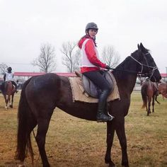 Kamilla Cattle Drive, Endurance Training, Akhal Teke, Horses For Sale, Show Jumping, Equestrian, Riding Helmets, Pure Products, Animals