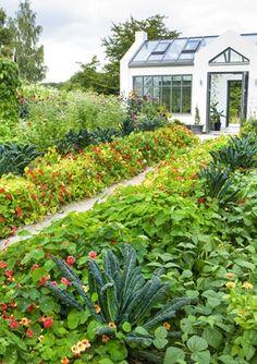 Helle Christensen Hjort's garden in Torna Hällestad, Sweden