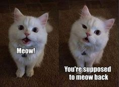 We love cute pictures of cats, dogs, horses, pigs, cows, lions, and tigers, and ... http://lolsalot.com/we-love-cute-pictures-of-cats-dogs-horses-pigs-cows-lions-and-tigers-and/ #Funny #Pic