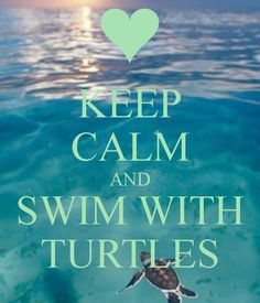 KEEP CALM AND SWIM WITH TURTLES