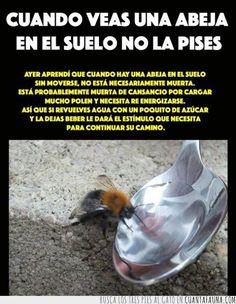 24792 - Si no ayudamos a las abejas, al final lo acabaremos pagando