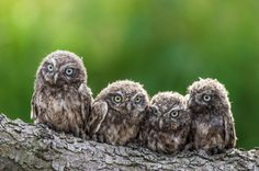 4 on the branch - .