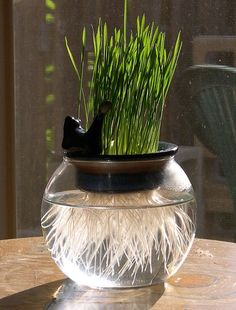 hydroponic cat grass wheat grass planter by gangiao on Etsy
