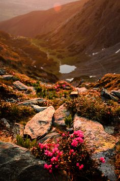Flowers in the sun - Sunrise from the ridge of Rodnei mountains, Romania