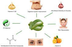 Aloe vera as immune system modulator