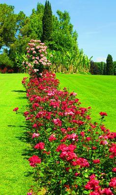 Beautiful Romantic Pictures, Beautiful Nature Scenes, Beautiful Nature Wallpaper, Beautiful Gif, Beautiful Roses, Beautiful Landscapes, Beautiful Flowers Garden, Amazing Flowers, Beautiful Gardens