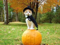 Cats know how to celebrate Halloween :-)