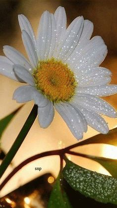 Красивая ромашка в россыпи капель воды! Gifs, Book Gif, Easter 2021, Boarders, Paradise, Animation, Nature, Plants, Beautiful
