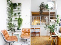 Plants- apartmentgardening