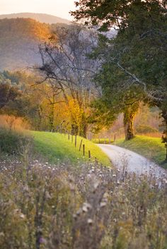 An old country road in Cades Cove, Tennessee