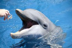 Dolphin- my favorite animal! My hubby and i swam with them on our honeymoon! They are so cute and smart!