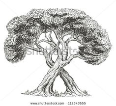Trees intertwining with each other - stock vector