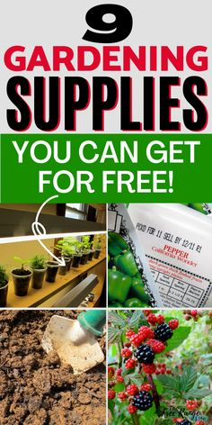 One of the most common reasons people give for not starting a garden is that they can't afford it. If you want to grow your own food without spending an arm and leg on supplies there are many gardening supplies you can get very cheaply or even for free. Here are 9 different gardening supplies you can get for free! Organic Vegetables, Growing Vegetables, Gardening Supplies, Gardening Hacks, All About Plants, Low Light Plants, Plant Aesthetic, Starting A Garden, Home Vegetable Garden