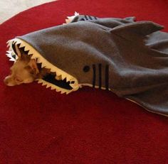 This handmade shark blanket will keep your dog cozy and warm all winter.