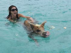 Bahamas - Swimming with pigs