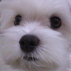 My lovely doggy:)