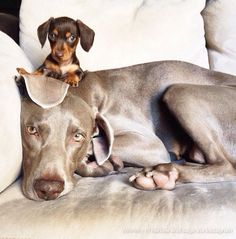 Meet Indiana and Harlow, Instagram's dynamic doggie duo.