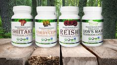 Ultra-clean functional mushrooms now available in capsules: Reishi, Shiitake, Lion's Mane and Cordyceps - grown in USA