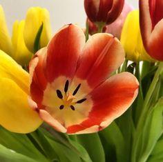 """Fräulein Nellüüü on Instagram: """"Diese Jahreszeit schreit irgendwie immer nach Tulpen im Wohnbereich 🌷❤️ . . #tulpen #blütezeit #frühling #tulpe #blütenzauber #blüten…"""" Flora, Plants, Instagram, Living Area, Seasons Of The Year, Plant, Planets"""