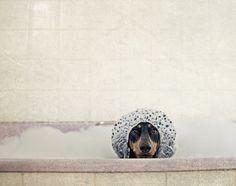 //\\ bath time  ( photo by Serena Hodson )