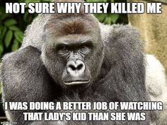Not sure why they killed me. I was doing a better job of watching that lady's kid than she was. - Harambi May 28 2016
