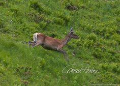 Motive finden - Conrad Amber Kangaroo, Animals, Wild Animals, Woodland Forest, Nature, Baby Bjorn, Animales, Animaux, Animal