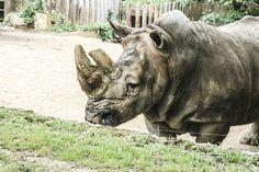 rhino in a zoo. So bad.
