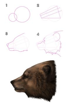 How to draw a grizzly bear head Animal Sketches, Animal Drawings, Drawing Sketches, Design Reference, Drawing Reference, Bear Sketch, Bear Head, Bear Art, Dog Paintings