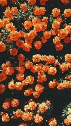 Find images and videos about flowers, wallpaper and orange on We Heart It - the app to get lost in what you love. Orange Wallpaper, Flower Wallpaper, Nature Wallpaper, Wallpaper Backgrounds, Trendy Wallpaper, Macbook Wallpaper, Wallpaper Ideas, Orange Aesthetic, Aesthetic Colors