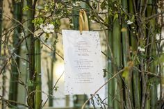 Tanabata - wish tree