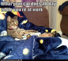What your cat does all day while you're at work.