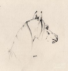 The Horse Sketch Drawing