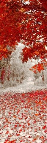 orange leaves and snowfall